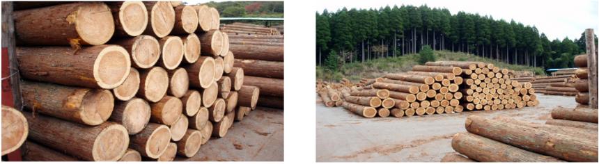 圧着工程①原木